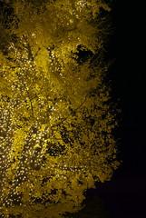 Roppongi pearls (vigorare) Tags: nightphotography night lights pentax midtown roppongi smc k10 k10d smcpentaxda smcpdal35mmf24al