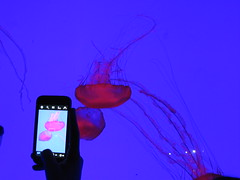 toronto aquarium jellyfish indoor smartphones... (Photo: tikyon on Flickr)