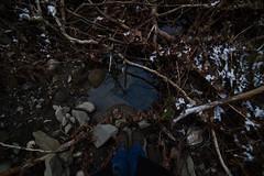 DSC_6528 (Shadows vines) Tags: snow feet nature water nikon looking down tokina rockymountainnationalpark f35 d600 17mm