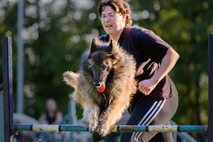 20140519 Agility action (Bas Bloemsaat) Tags: dog sport jump exercise action contest agility
