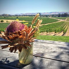 Scribe Winery View