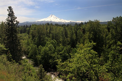 The drive to Mount Hood (AmandaMT) Tags: blue mountain snow green oregon forest mount westcoast mounthood mountaintop 2014 hwy35
