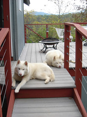 "Czar and Hudson On A Cabin Trip • <a style=""font-size:0.8em;"" href=""http://www.flickr.com/photos/96196263@N07/14531284176/"" target=""_blank"">View on Flickr</a>"