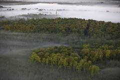 NCM10006-Upper Mississippi Forest Project (terracarbon) Tags: itascacounty minnesotaforests natureconservancy upmblandin aerial aerialview fog groundfog mists northernforest treesinfog neargrandrapids minnesota usa