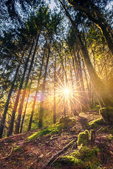 A ray of light (Dg.63) Tags: tree light forest sun nature star canon 6d autumn