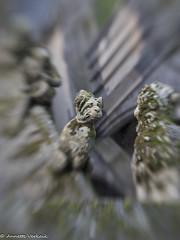 Den Bosch 6 (Annette_V) Tags: den bosch nikon club nederland sint jan avond fotografie gezellig