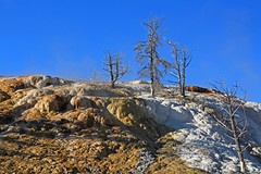 Minerva terrace (zgrial) Tags: yellowstone nationalpark mammothhotsprings minervaterrace calciumcarbonate travertine thermophiles geothermal geology limestone volcanic fall baretrees deadtrees landscape steam rocks montana zgrial