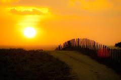 Over the Sun Set (Mozart Souto) Tags: sunset pordosol prdosol sol cercado cerca estradadebarro estrada estradas northeast northeastbrazil northeastbrasil nordeste brasil brazil