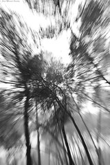 IMG_8321 (Juan Manuel Sanchez) Tags: otoo adrianospicture juanmanuelsanchez hojas arce rojo niebla fog campo montaa madrid espaa canon d60 naturaleza maana cielo silueta contraluz cesped hierba bosque norte