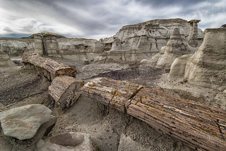 Petrified Remains