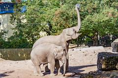 zoo heidelberg12 (micnie) Tags: heidelberg germany zoo tiere nikon d5200 vogel affe otter elefant gorilla schimpanse lwe waschbr schildkrte zebra straus papagei badenwrthenmberg
