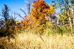 canton-107 (That Girl, Teri) Tags: fall colors trees nature centering michigan canton