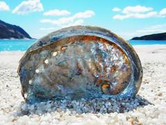 Abalone shell - Tasmania - Australia (pacoalfonso) Tags: pacoalfonsocom travel australia tasmania abalone shell wineglass bay beach macro