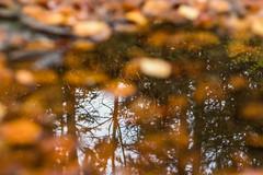 Herbst im Fichtelgebirge 03 - Farben im Wasser (ho4587@ymail.com) Tags: herbst fichtelgebirge wald licht moos grn laub laubfrbung braun wasser spiegelung bokeh