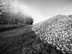 Betteraves de Picardie II (steph20_2) Tags: betterave panasonic gh3 m43 714 lumix monochrome monochrom paysage landscape oise picardie terroir noir noiretblanc ngc blanc black bw white skanchelli chemin