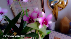 Orchidee in unschärfe (Bernsteindrache7) Tags: autumn color flora fauna flower green bloom blossom blume home house handy indoor pink