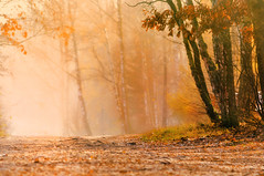 Sweet November (eggii) Tags: forest wood misty mist fog tree autumn november free sweet light lighting mood
