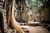 Ta Prom Temple (suypich) Tags: cambodia siem reap temple travel culture fujifilm xpro2 xf23mm asia angkor