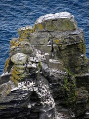 Cliffs of Moher, County Clare, Ireland(4) (Anne O.) Tags: 2014 clare cliffsofmoher countyclare irland klippenvonmoher panoramio6954847110188206