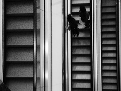 Curiosity 123 H 004 DSC 2015 sw (SAPhD.com) Tags: 1stern 5sterne above aerialview alwayswearyourcamera artinbw bw blackwhite blackandwhite building city citycenter couriosity deutsch deutschland digital directions dsc escalator greyingrey hannover height indoor innercity inside layers lines loneliness lookout lookingdown lost lostplace lostplaces mall monotone monotony moody observation outlook passersby passing pattern people pointofview prospect public publicplaces saphd shop shopping shoppingmall stairs stairway urban urbanexploration urbex view warehouse watching