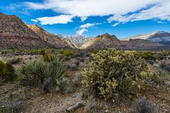 048-RRC160201_47088 (LDELD) Tags: lasvegas nevada unitedstates us desert rugged dry harsh wild redrocknationalconservationarea mountains cliff snow