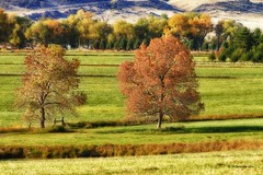 Autumn Landscape Dream (slava_kushvalieva) Tags: autumn trees red yellow green gold golden leaves leaf colorado colorful fallfoliage feilds country farms rockymountains co nature photography photographs stockimage pictures gicleeprint fineartprint canvasart framedprint poster decorate decorations officewalls homewallsart cafeart restaurantart boardroomart waitingroom commercialspaceart