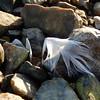 (Landanna) Tags: whitefeather witteveer hvidfjer nature natur natuur sten steen stone stones beachstones