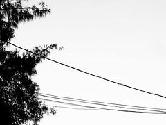 IMG_0052 (vianalucao) Tags: bw black white blackwhite blackandwhite pretoebranco pb preto e branco brasil aracaju sergipe nature natureza brazil wire wires