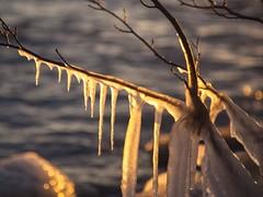 Ice Spikes in the sun (christelwh) Tags: vinter autum cold ice icicles icecold sea ocean beach seashore finland sun sunlight