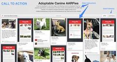 Nonprofit Pinterest Advocacy - AARF
