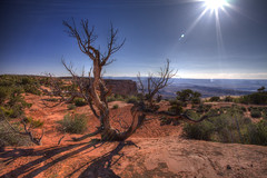 canyonlands-hdr-1 (Wildsight Photography) Tags: park shadow sky sunlight tree utah cliffs national canyonlands twisted hdr