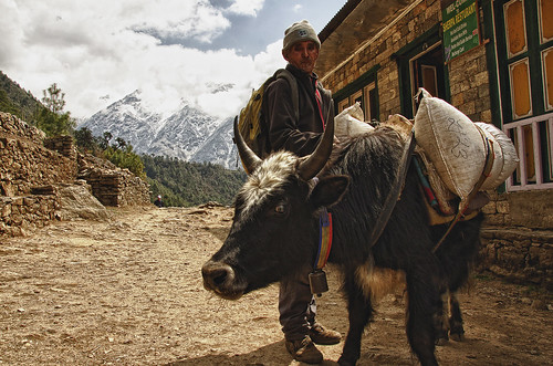 the yaks