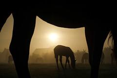 Horseview A (Drummerdelight) Tags: gentle giants fuji x e1 horses shillouette frame horse lowpov