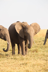 IMG_5790.jpg (rbariletto) Tags: africa elephant animal animals elephants masaimara