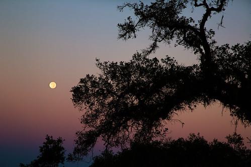 california sunset moon tree silhouette canon sonomacounty santarosa moonset beltofvenus zoomlens ef24105mmf4lisusm nagasawapark 5dmarkiii vision:mountain=0595 vision:sunset=0732