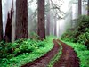 Forest road redwood national park picture (Infoway LLC - Website Development Company) Tags: wallpaper beautiful wonderful nice superb awesome images exotic hd illustrator incredible breathtaking classy bambooforest mindblowing dryforest amazonrainforest greenforest winterforest woodforest junglewallpaper sunsetwallpaper islandwallpaper summerforest responsivewebsitedesign subtropicalforestwallpaper waterfallintropicalforest responsivewebdesigncompany mountainsnowforest forestroadredwoodnationalparkpicture yellowredautumnforest tropicaldesertisland tropicalforestwithriver