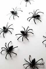305:365:2013 - Spiders... Not just for Halloween (phil wood photo) Tags: november black spiders plastic 365 leftover creepycrawly day305 project365 2013 colourchallenge 3652013 01112013