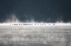 Rest stop (LouisvilleUSACE) Tags: mist bird river illinois unitedstates pelican steam migratory navigation dredge usace moundcity migrate armycorpsofengineerslouisville