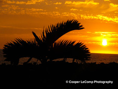 Small Palmtree at Sunset (Cooper LeComp Photography) Tags: sunset wallpaper hawaii pretty places palmtree tropical