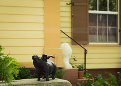 Everyday New Orleans: When Pigs Fly (away for the summer, marysmyth(NOLA13) ) Tags: plants green statue garden bench pig whimsy neworleans pots lush gardendistrict isnthejustthecutest