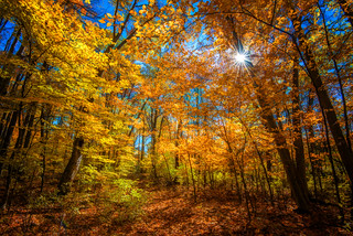 Sugar Bush with Autumn Colours