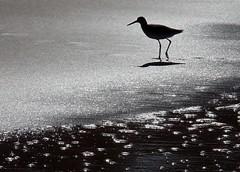 Water Bird (~Bella189) Tags: bigmomma gamewinner friendlychallenges herowinner storybookwinner