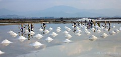 Vietnamese salt field workers (NettyA) Tags: morning travel reflection field workers women asia vietnamese salt vietnam southeast doclet khanhhoa ninhhoa canoneos550d