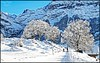 Grindelwald  Switzerland (donnaMcreations) Tags: trees winter white snow mountains switzerland trail grindelwald sledging snowtrails borderfx