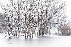 Last Winter... (blichb) Tags: schnee trees lake germany bayern deutschland bavaria see pond andechs eis bume baum weiher gefroren 2013 fnfseenland canon6d blichb vision:outdoor=0921 vision:plant=0702