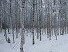 HFP#CZFC (HFPhoto1) Tags: nature forest photography wintertime nordiclight distagont235
