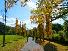 Walking on Autumn's Road