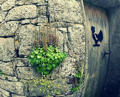 GOPR6376 (darrenellis1969) Tags: door flowers chicken wall jersey gopro