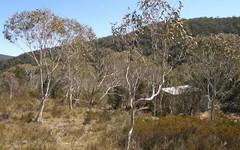 158 Griffins Road, Braidwood NSW