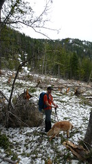 David (Opus) and Gus in the filed of avalanche debris